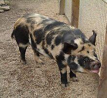 Black & Brown Pig by amylw1