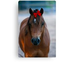 Merry Christmas Pony Canvas Print