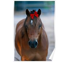 Merry Christmas Pony Poster