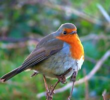 Puffed Up by kernowseb
