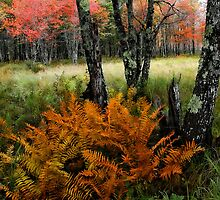 The Bog - Fall Color by T.J. Martin