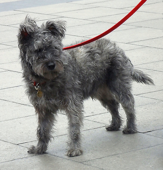 Shaggy Dog with Red Lead by RuthMoore