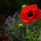 The Summer Garden by Fleur Hallam