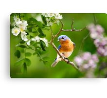 Beautiful Bluebird Art Canvas Print
