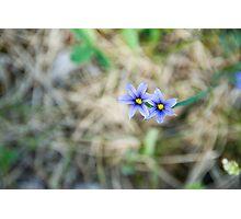 purple wildflower Photographic Print