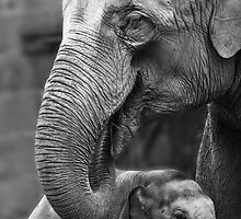 Protecting the little one! by Shaun Whiteman