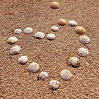 Heart Shells by dogboxphoto