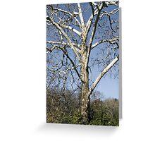 Leafless Tree Greeting Card