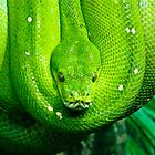 Green Tree Snake by CharlieD
