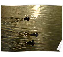 Ducks! Poster