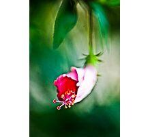 DOF  Photographic Print