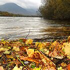 Autumn Leaves washed ashore, Loweswater, Cumbria by RuthMoore