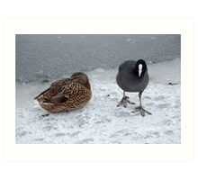 Cusworth park pond & it's inhabitants Art Print