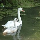 Mother Swan and Child by grrizzly