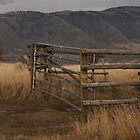 Old Fence by vernonite