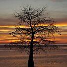Evening Tree by NikonJohn
