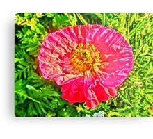Green Island Poppy Metal Print