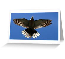 The Collared Dove Greeting Card