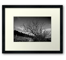 Of tree and fence Framed Print