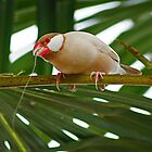Tropical Bird On Branch by Moodycamera Photography