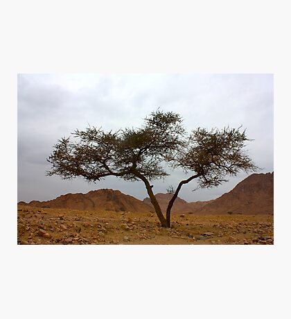 double tree Photographic Print