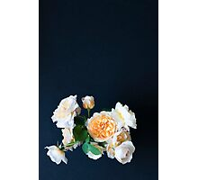 English roses Photographic Print