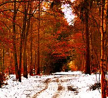 Autumnal Winter by JackPhotography