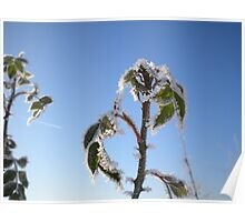 Iced Leaves with Blue Sky Poster