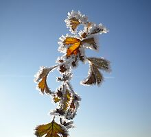 Iced Leaves on Blue Sky by evissaboutique