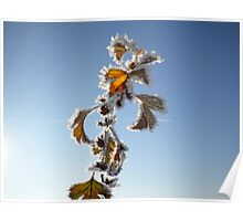 Iced Leaves on Blue Sky Poster