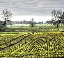 Essex Farmland by Peter Tachauer