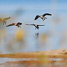 The Geese Returning by Ned Elliott