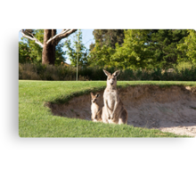 Kangaroos on the golf course, Canvas Print