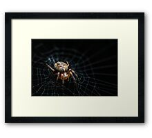 Spider on the Web  Framed Print