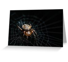 Spider on the Web  Greeting Card