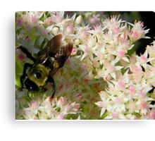 Bumble Bee       ^ Canvas Print