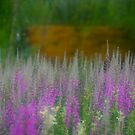 ***** VSOP . Fairy - tale misty landscape . Nordland. Norway . by Brown Sugar. F** Views (1040) . Favs(4). Miracle ! Wow !!! Thanks & dziękuję bardzo !!! by © Andrzej Goszcz,M.D. Ph.D
