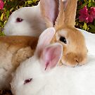 """""""The Bunny Bunch"""" - rabbits snuggling by ArtThatSmiles"""