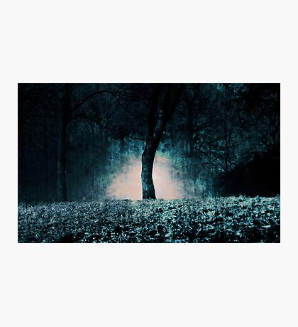 In the fog which surrounded the trees... Photographic Print