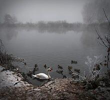 Misty Morn by Fletch147