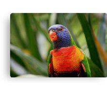 Colourful Rainbow Lorikeet Canvas Print
