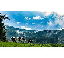 Cows in the Clouds Photographic Print