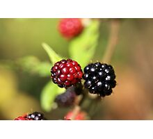 Red and black blackberry fruits. Photographic Print