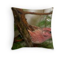 Purple Finch Looking as Lovely as Ever Throw Pillow