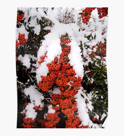 Berried in snow! Poster