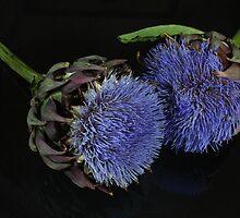 Artichoke flowers by Zosimus