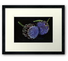 Artichoke flowers Framed Print