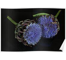Artichoke flowers Poster