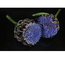 Artichoke flowers Photographic Print