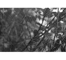 a Spiders world Photographic Print
